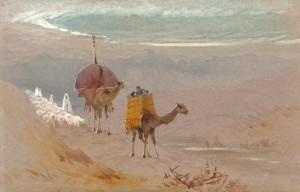 Trotter camels